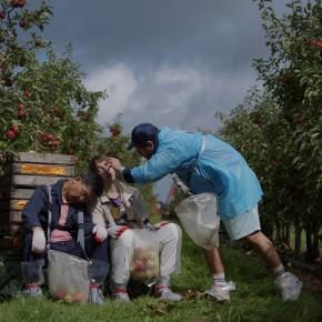 """Strombergsche Atmosphäre auf der Apfelplantage: """"Selbstkritik eines bürgerlichen Hundes"""" von Julian Radlmaier"""